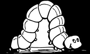 caterpillar-2028028_640
