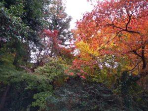 木山神社。裏門。紅葉