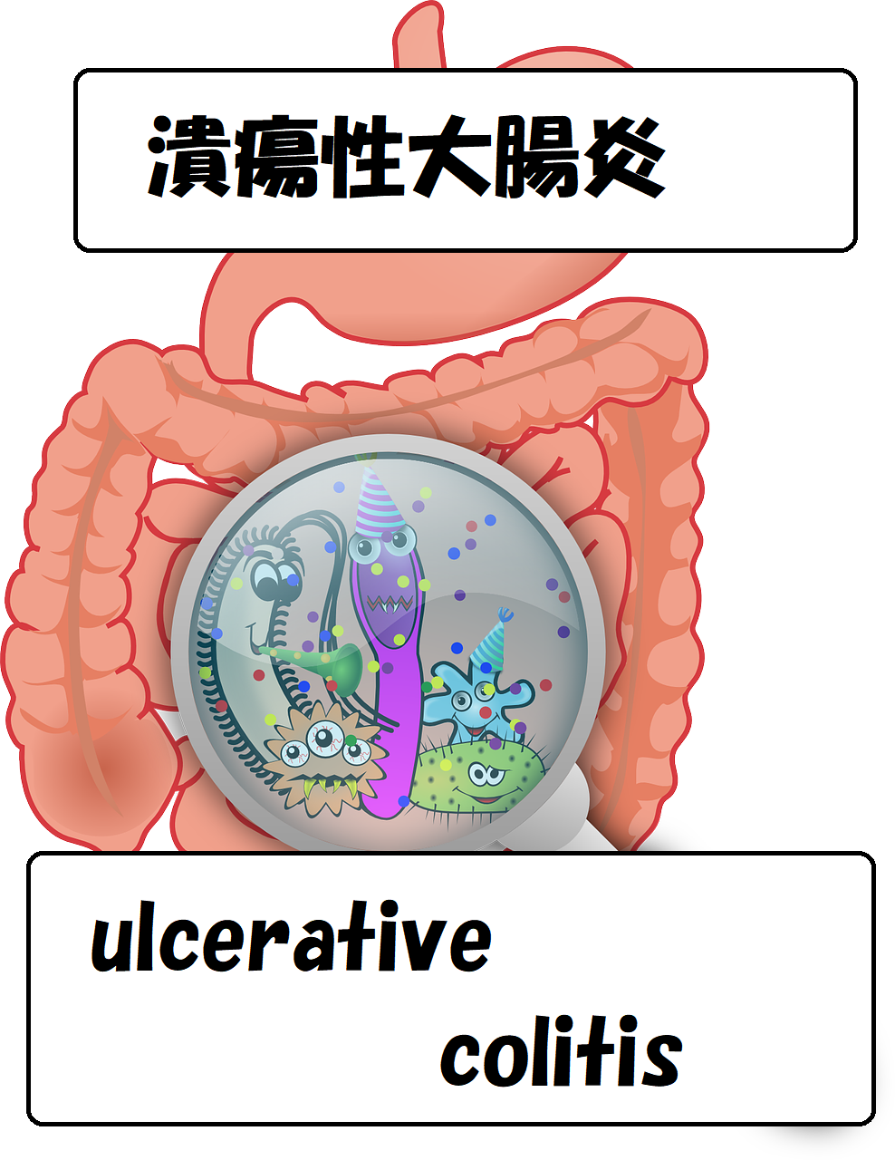 colon 大腸 - コピー