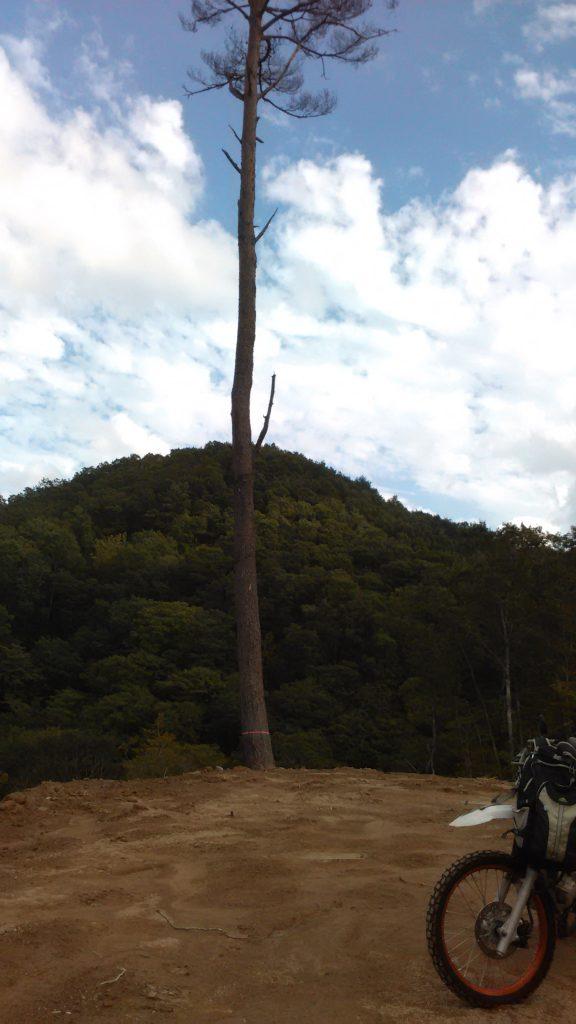 一本松。山の神谷