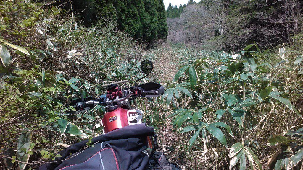fukatani X2 行き止まり。笹の葉