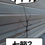 ナナフシ - コピー