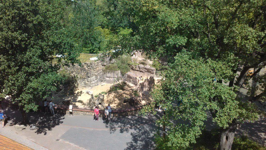 Zoo ミーアキャット