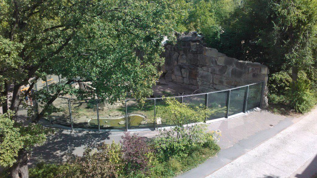 Zoo 猿