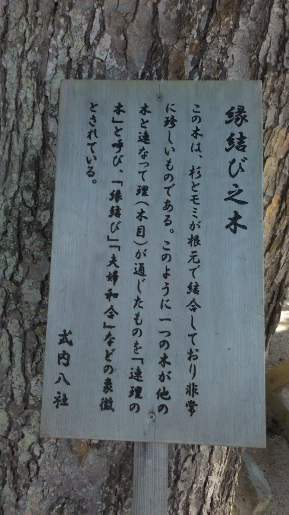 縁結びの木。看板