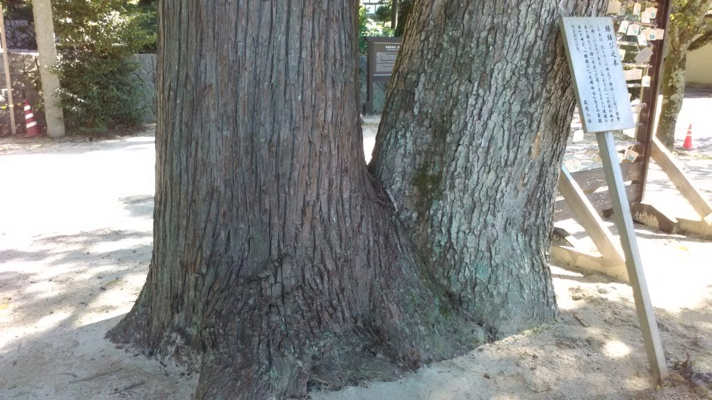 縁結びの木。根元