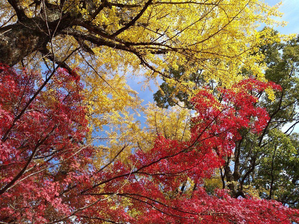 紅葉。緑黄赤