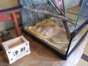 白蛇。浄財