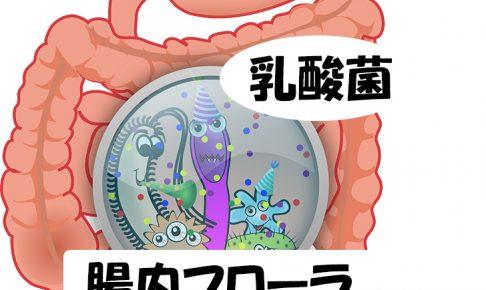 colon-乳酸菌