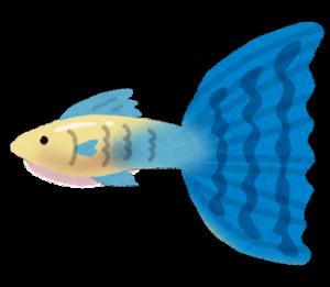 fish_guppy
