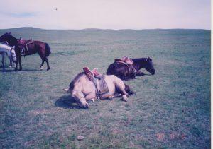横になる馬