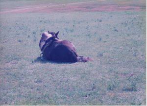 馬。横座り