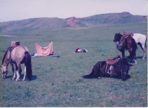 横になる馬2