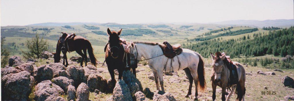 元気のない馬たち