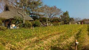蕎麦畑、蕎麦屋