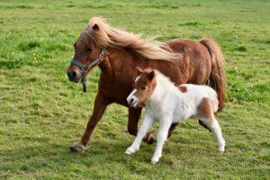 foal-4093986_640