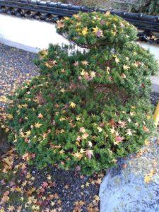 Xmas tree クリスマスツリー