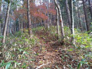 登りはじめ。開けた植林地