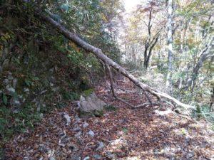山乗山。東側。倒木