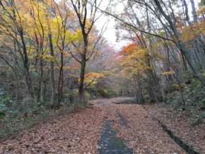 落ち葉の帰り道