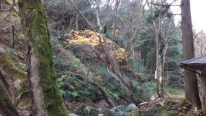 山乗渓谷。黄葉