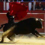 bulls-2341110_640