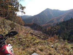 茅見戸島線から伐採広場を望む