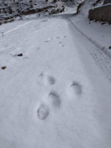 footprints hare ウサギの足跡2