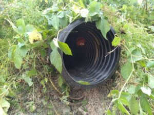 スズメバチの巣 720